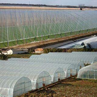Mitef - Manta de plástico Transparente para Invernadero, Resistente a ...